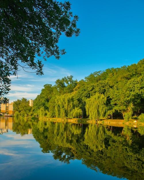 Piękne Jezioro Latem Z Odbiciem Drzew Na Powierzchni Wody. Piękny Park Miejski W Kijowie Darmowe Zdjęcia