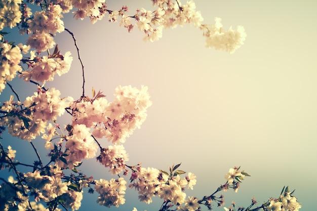 Piękne kolorowe tło rozmycie kwiatu. poziomy. koncepcja wiosny. tonowanie. selektywne focus. Darmowe Zdjęcia