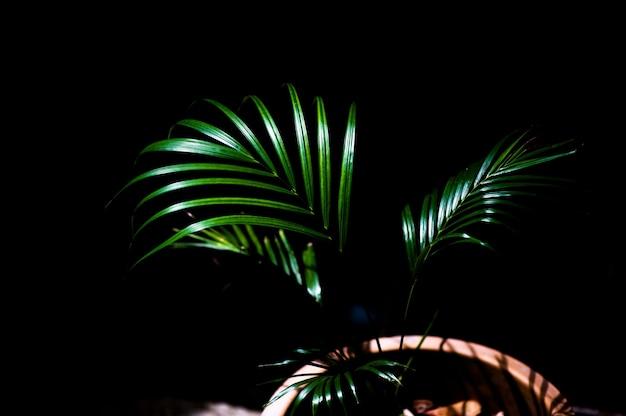 Piękne liście wpływające na słońce Premium Zdjęcia