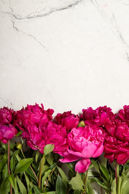 Piękne Piwonie Na Szarym Tle. Widok Z Góry, Miejsce Na Tekst. Premium Zdjęcia