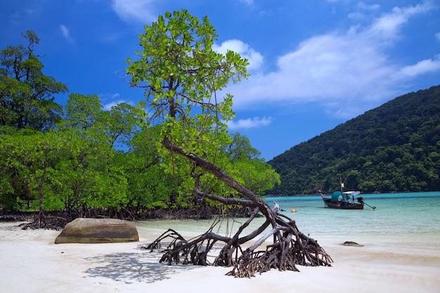 Piękne Plaże I Namorzyny Tropikalnego Morza. Premium Zdjęcia