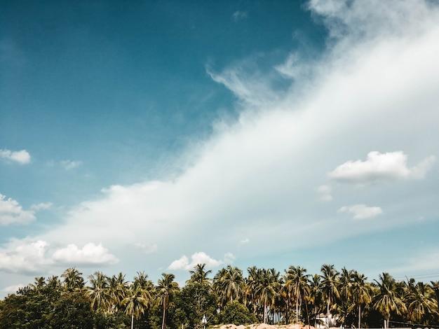 Piękne Pochmurne Niebo Z Egzotycznymi Drzewami Darmowe Zdjęcia