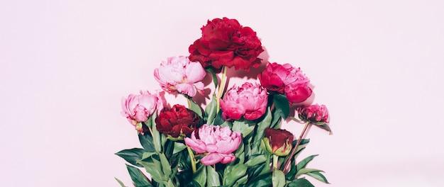 Piękne różowe kwiaty piwonii z twardym cieniem na pastelowym tle Premium Zdjęcia