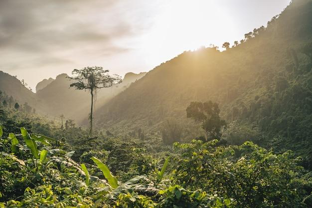 Piękne Słońce Nad Lasem Górskim Darmowe Zdjęcia