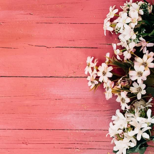 Piękne Stokrotki Na Drewnianej Podłodze Darmowe Zdjęcia