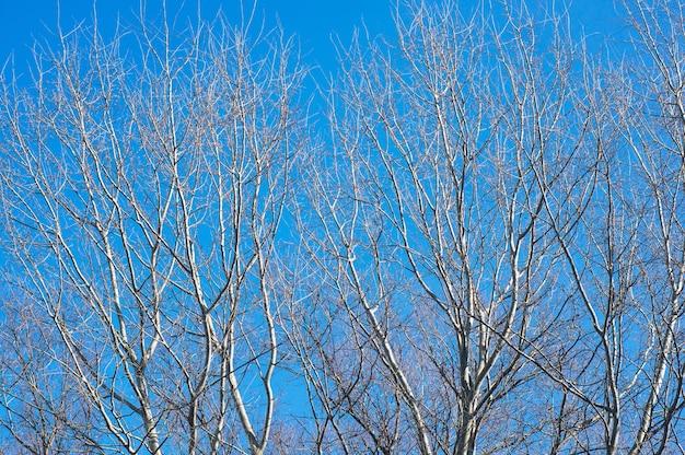 Piękne Ujęcie Bezlistnych Drzew Na Niebieskim Niebie Darmowe Zdjęcia