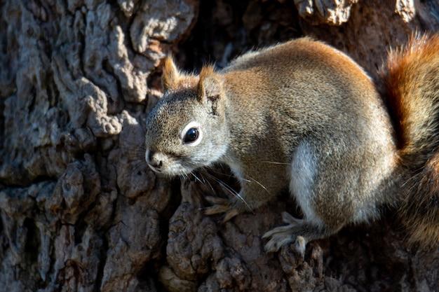 Piękne Ujęcie Brązowej Wiewiórki W Lesie Darmowe Zdjęcia