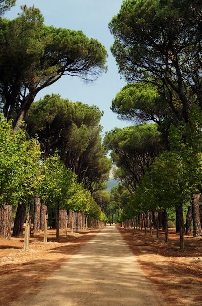Piękne Ujęcie Chodnika W Parku Otoczonym Drzewami Darmowe Zdjęcia