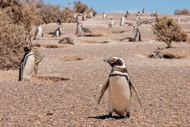 Piękne Ujęcie Grupy Pingwinów Afrykańskich Darmowe Zdjęcia