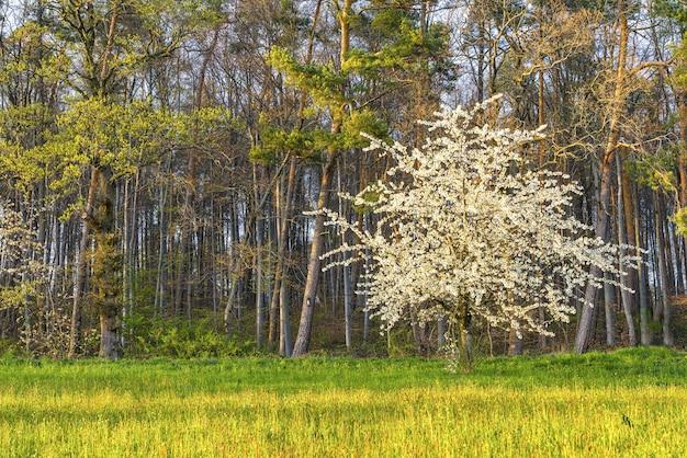 Piękne Ujęcie Kwitnącego Białego Drzewa Otoczonego Zielenią Darmowe Zdjęcia