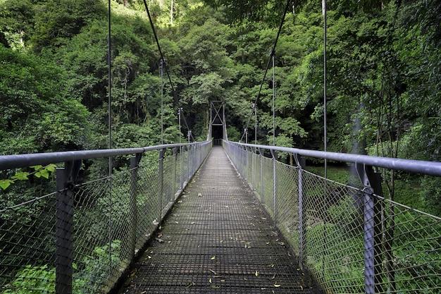 Piękne Ujęcie Mostu W środku Lasu Otoczonego Zielenią Drzew I Roślin Darmowe Zdjęcia