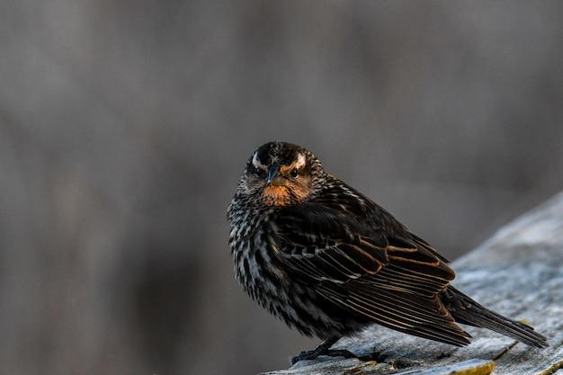 Piękne Ujęcie Ptaka Na Drewnianej Kłodzie W Lesie Darmowe Zdjęcia