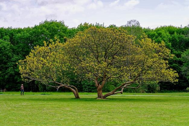 Piękne Ujęcie Rosnącego Drzewa W środku Parku Z Drzewami Darmowe Zdjęcia