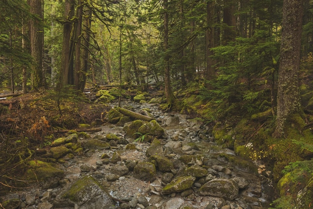 Piękne Ujęcie Skalistej ścieżki W środku Lasu Z Zielonymi Liśćmi Drzew Darmowe Zdjęcia