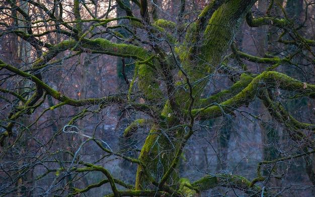 Piękne Ujęcie Starego Dębu Porośniętego Zielonym Mchem W Parku Leśnym Maksimir W Zagrzebiu Darmowe Zdjęcia