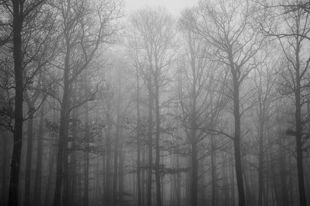 Piękne Ujęcie Wielu Bezlistnych Drzew Pokrytych Mgłą Wczesnym Rankiem Darmowe Zdjęcia