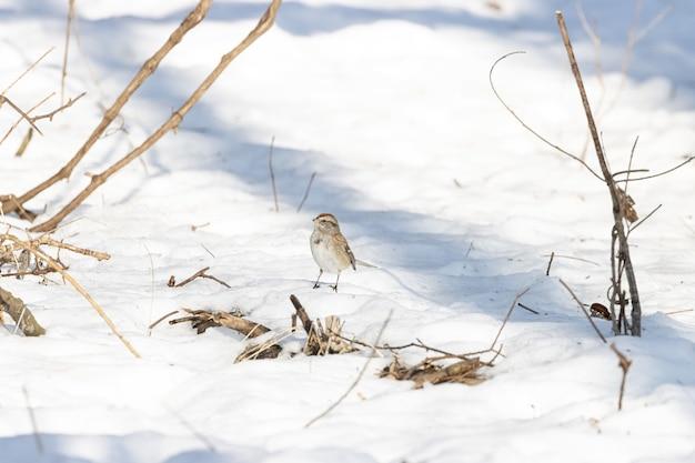 Piękne Ujęcie Wróbla Stojącego Zimą Na Zaśnieżonej Powierzchni Ziemi Darmowe Zdjęcia