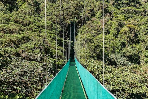 Piękne Ujęcie Zielonego Mostu Wiszącego Chodnika Baldachimem Z Zielonym Lasem Darmowe Zdjęcia