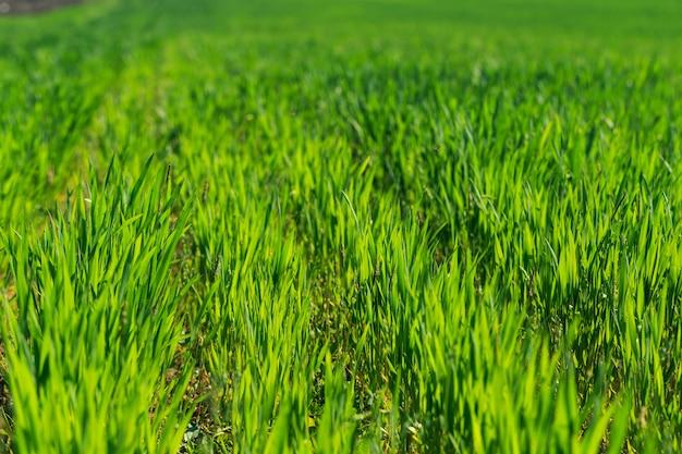 Piękne zielone pole Premium Zdjęcia