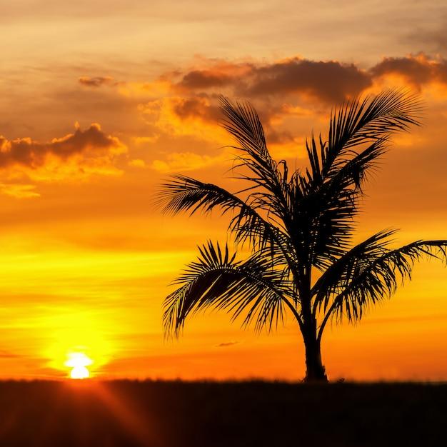 Pięknej Sylwetki Kokosowy Drzewko Palmowe Na Niebo Oceanu Neary Dennej Plaży Przy Zmierzchu Lub Wschodu Słońca Czasem Dla Czas Wolny Podróży I Wakacje Pojęcia Premium Zdjęcia