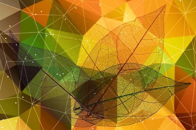Pięknie kolorowe jesienne liście Darmowe Zdjęcia