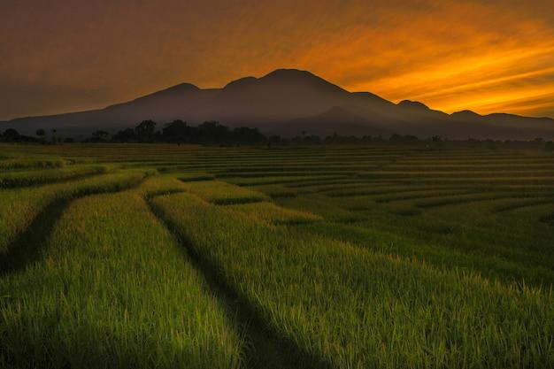 Piękno poranka w indonezyjskich polach ryżowych z wysokimi górami i pięknymi chmurami Premium Zdjęcia