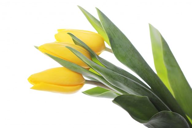 Piękny Bukiet Tulipanów, Kolorowe Tulipany, Natura Darmowe Zdjęcia