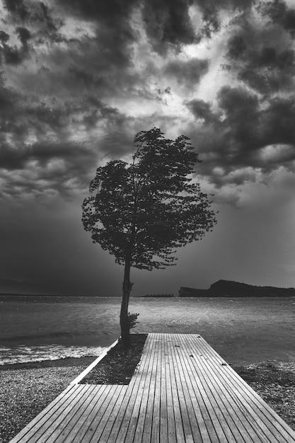 Piękny Ciemny Czarno-biały Strzał Z Jednego Drzewa Na Drewnianym Molo W Pobliżu Oceanu Darmowe Zdjęcia