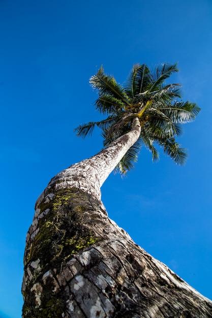 Piękny Duży Drzewko Palmowe Przy Oceanem Premium Zdjęcia