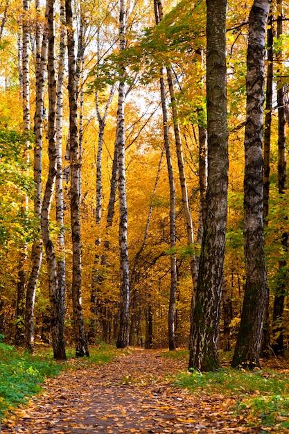 Piękny Jesienny Park Z Kolorowymi Liśćmi Premium Zdjęcia