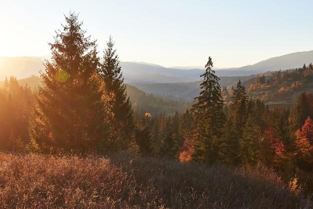 Piękny Jesienny Poranek Na Punkt Widokowy Nad Głęboką Doliną Leśną W Karpatach, Ukrainie, Europie. Darmowe Zdjęcia