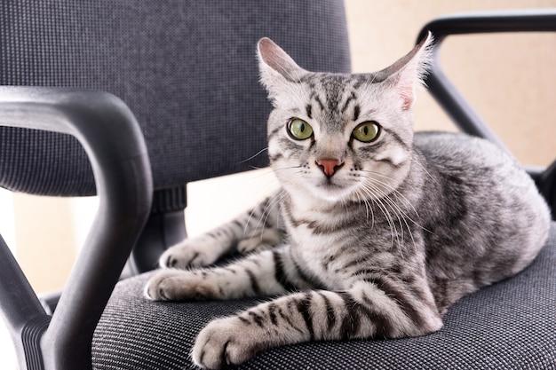Piękny Kot Na Krześle Z Bliska Premium Zdjęcia