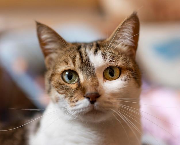 Piękny Kot Z Innymi Oczami Darmowe Zdjęcia