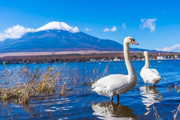 Piękny krajobraz halny fuji wokoło yamanakako jeziora Darmowe Zdjęcia