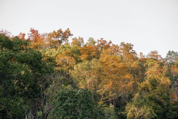 Piękny Krajobraz Pięknej Góry Las Jesienią Z Kolorowymi Liśćmi W Przyrodzie Premium Zdjęcia