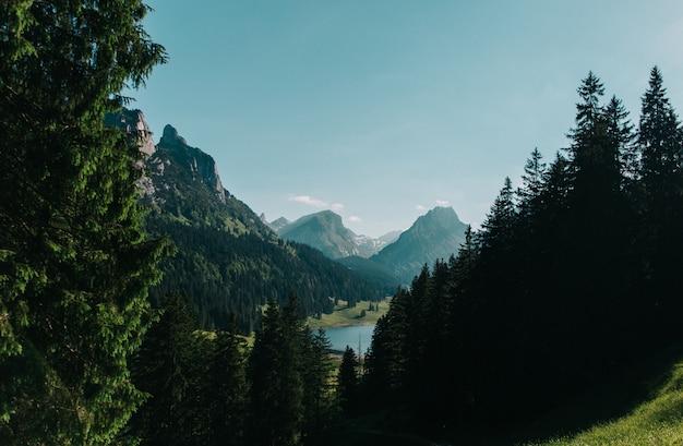 Piękny Krajobraz Strzelał Drzewa I Góry Pod Jasnym Niebieskim Niebem Darmowe Zdjęcia