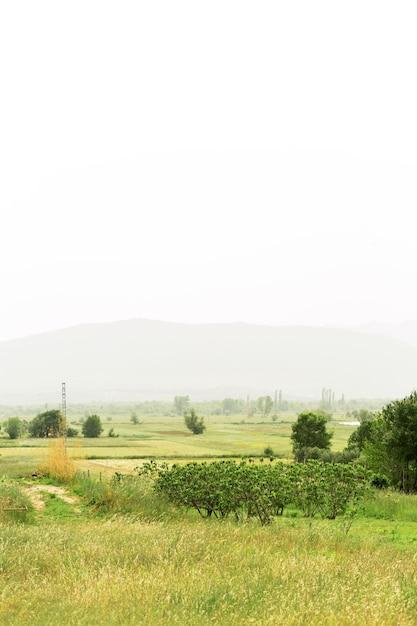 Piękny Krajobraz Z Mgłą Darmowe Zdjęcia
