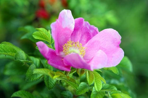 Piękny Kwiat Wrzośca Darmowe Zdjęcia