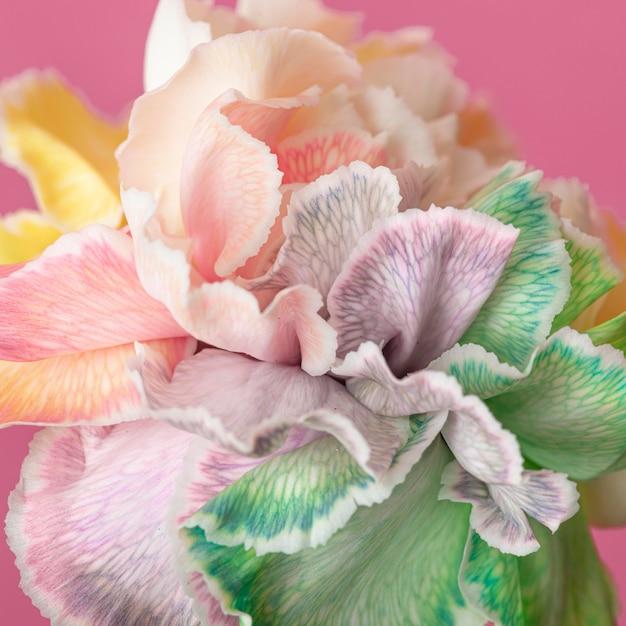 Piękny Kwiat Z Bliska Darmowe Zdjęcia