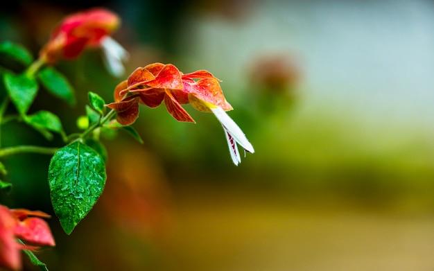 Piękny kwitnienie kwiat przy parkiem, nepal. Premium Zdjęcia