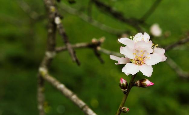 Piękny Kwitnienie Kwiat W Drzewie Darmowe Zdjęcia