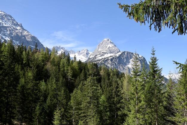 Piękny Las Z Dużą Ilością Jodeł Z Wysokimi Ośnieżonymi Górami Darmowe Zdjęcia
