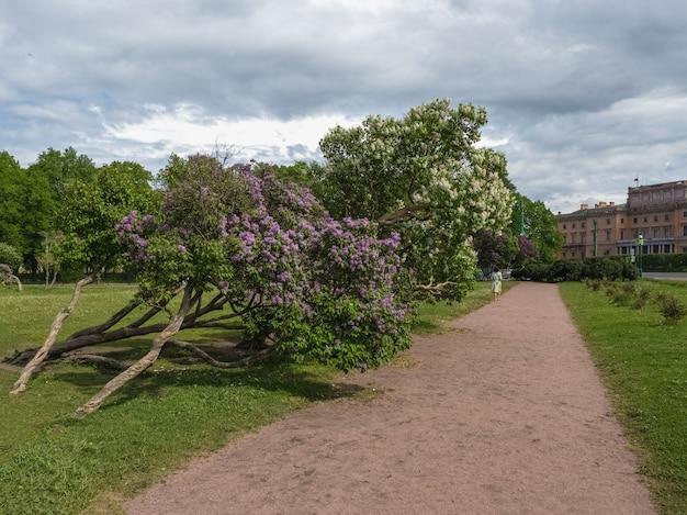 Piękny Letni Pejzaż Z Kwitnącymi Bzami. Petersburg, Premium Zdjęcia