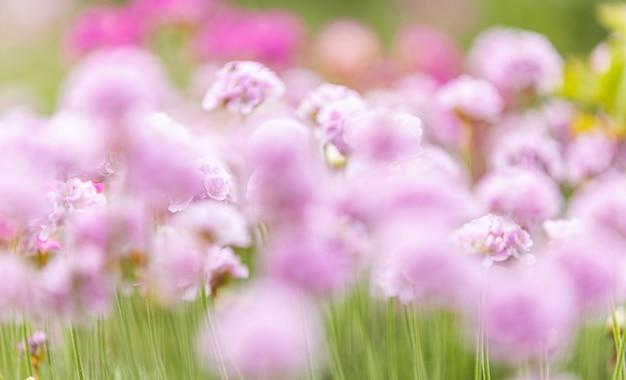 Piękny Magiczny Zamazany Natury Tło Z Zamazywać Kwitnienie Menchii Kwiaty I Sunbeam, Natura Piękna, Tonuje Projekt Wiosny Naturę, Słońce Rośliny. Premium Zdjęcia