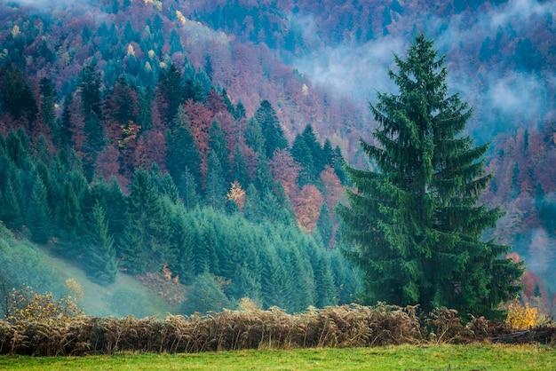 Piękny Majestatyczny Krajobraz Z Drzewami Iglastymi Na Górze. Premium Zdjęcia