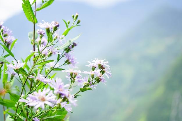 Piękny menchia kwiatu natury tło. Premium Zdjęcia