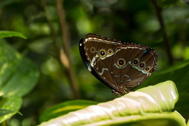 Piękny motyl, owad na zielonym tle przyrody, sfotografowany w schmetterlinghaus, Premium Zdjęcia