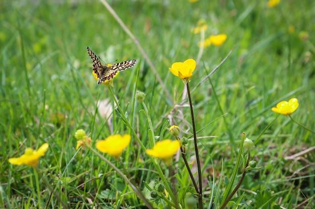 Piękny Motyl Siedzący Na żółto-płatkowym Kwiatku Darmowe Zdjęcia