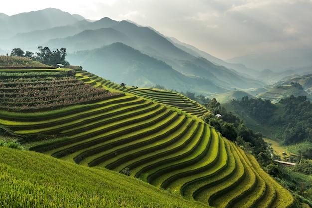 Piękny Natura Krajobraz Irlandczyka Pole Na Górze Od Mu Cang Chai, Yenbai, Wietnam. Premium Zdjęcia