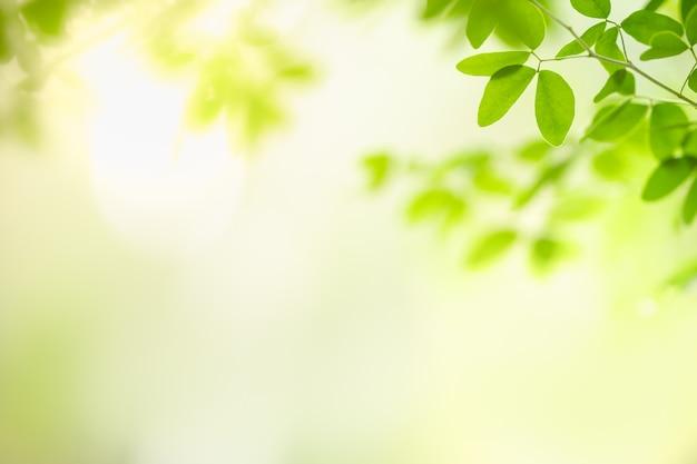Piękny Natura Widoku Zieleni Liść Na Zamazanym Greenery Tle Pod światłem Słonecznym Z Bokeh I Kopii Astronautyczny Używać Jako Tło Naturalnych Roślin Krajobraz, Ekologii Tapety Pojęcie. Premium Zdjęcia